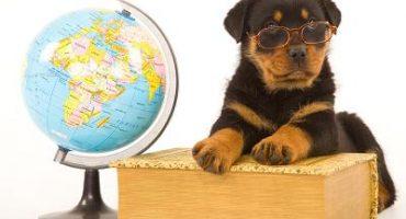 Urlaub mit Tieren – Reisetipps und Checkliste