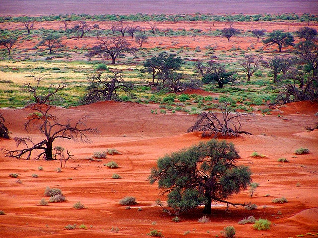 Wueste Namibia