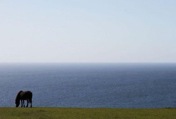 Pferd auf der Wiese in Cornwall