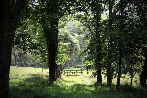 Cornwall Natur