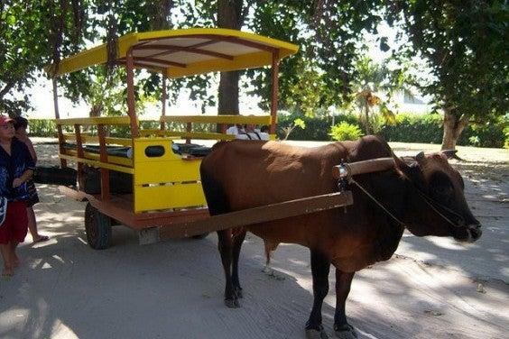 Ochsen-Taxi