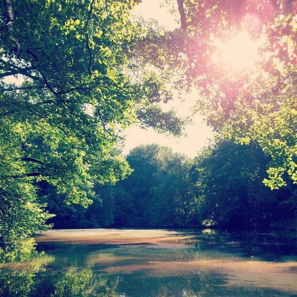 tiergarten, berlin, sonne, see, bäume, wald,